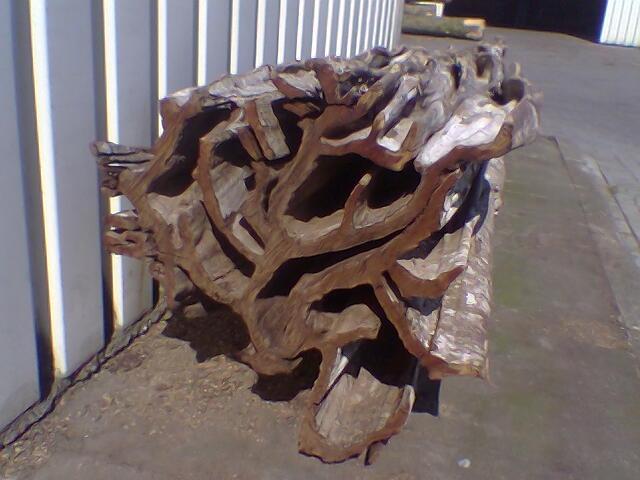 Rio Palisander Baum sdatec.com